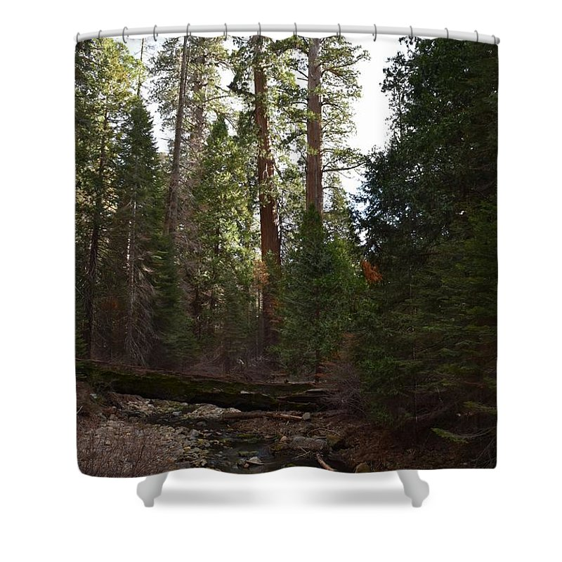 Bark Shower Curtain featuring the photograph Creek And Giant Sequoias In Kings Canyon California by Will Sylwester