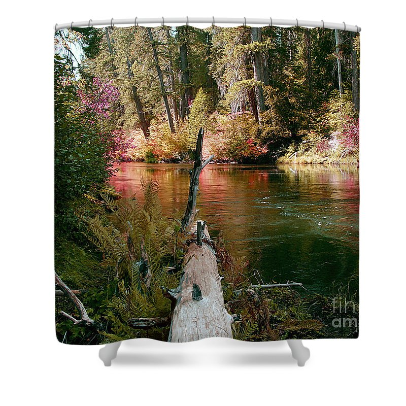 Fall Season Shower Curtain featuring the photograph Creek Fall by Peter Piatt