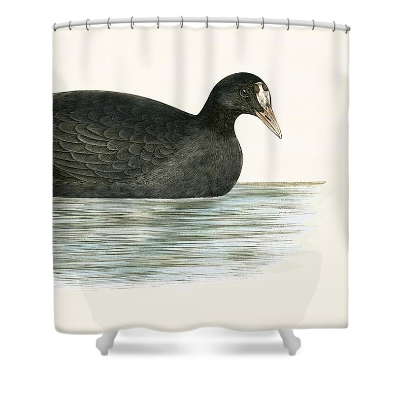 Bird Shower Curtain featuring the painting Crested Coot by English School
