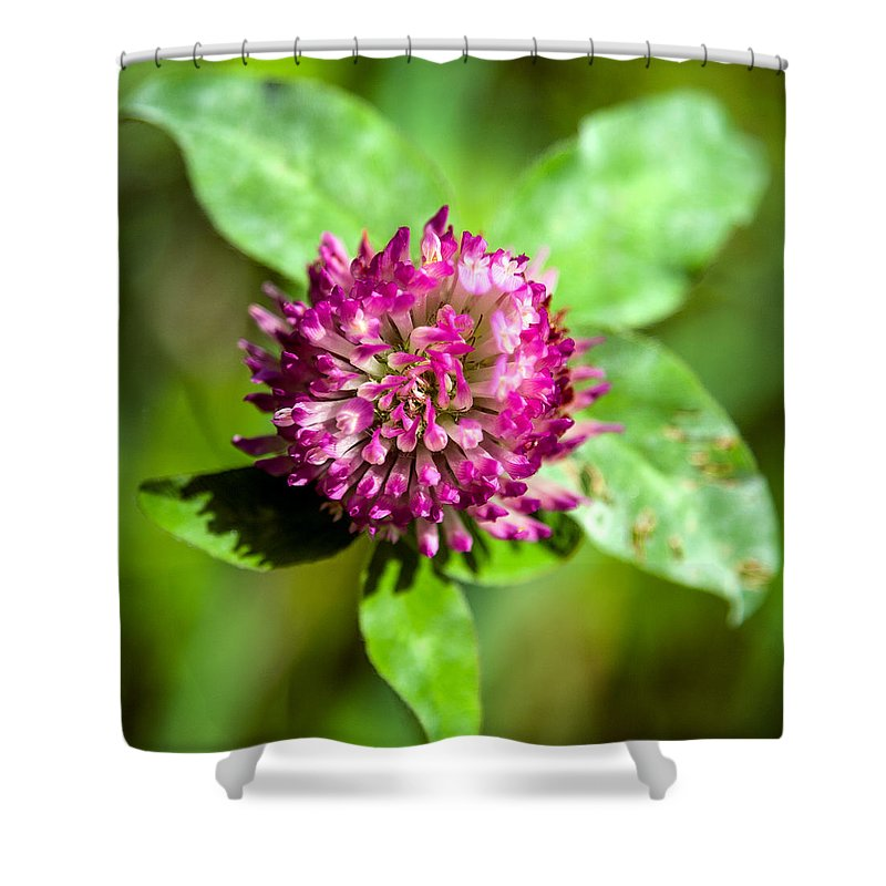 Flower Shower Curtain featuring the photograph Crimson And Clover by John Haldane