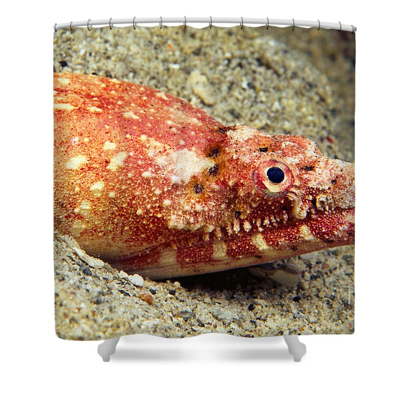 Ambush Shower Curtain featuring the photograph Crocodile Snake Eel by Dave Fleetham - Printscapes