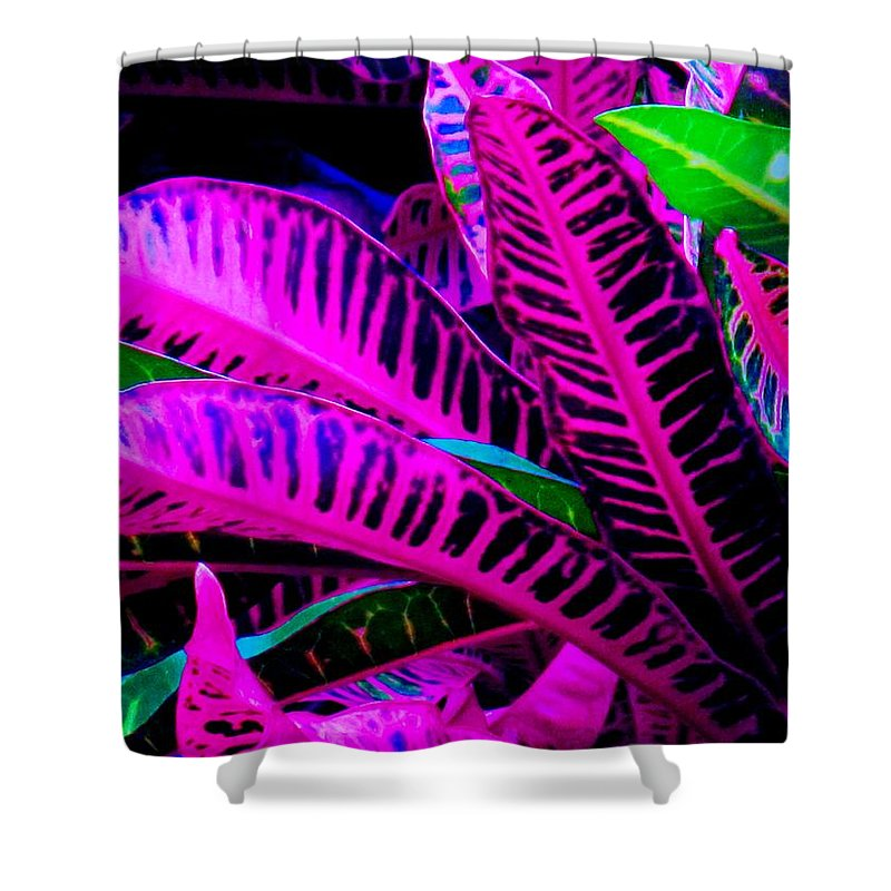 Croydon Plants Purple Green Shower Curtain featuring the photograph Croton by Ian MacDonald