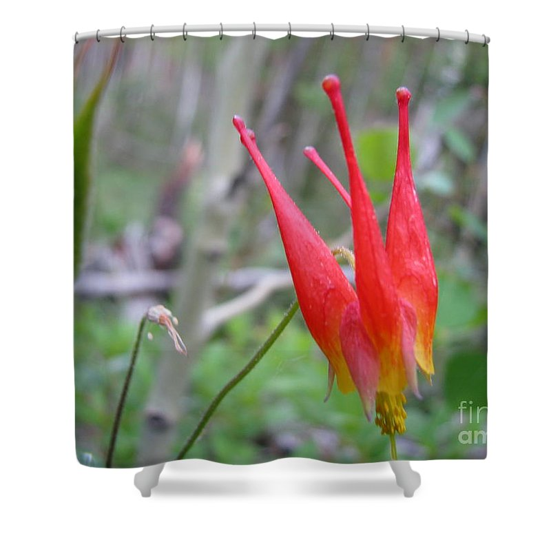 Flowers Of Colorado Shower Curtain featuring the photograph Crown by Amanda Barcon