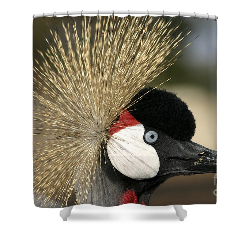 Crowned Shower Curtain featuring the photograph Crown Crane Close Up by Danny Yanai