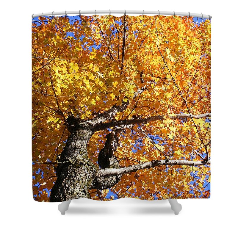 Trees Shower Curtain featuring the photograph Crown Fire by Dave Martsolf