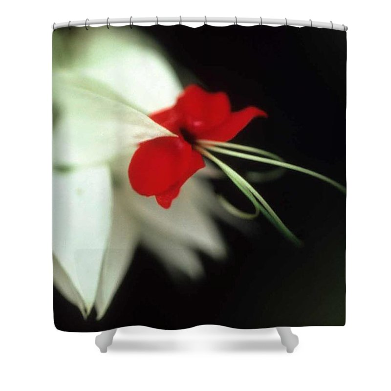 Crown Of Thorns Shower Curtain featuring the photograph Crown Of Thorns by Laurie Paci