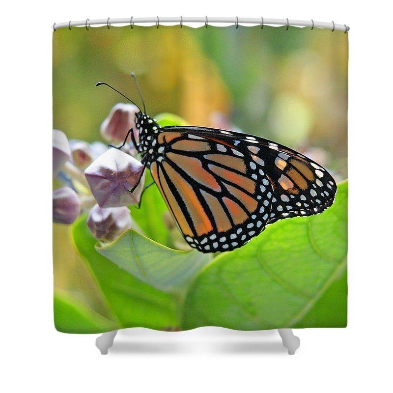 Monarch Butterfly Shower Curtain featuring the photograph Crown Room by Kevin Smith
