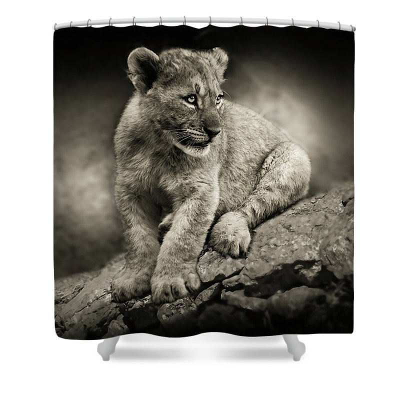 Lion Shower Curtain featuring the photograph Cub by Christine Sponchia