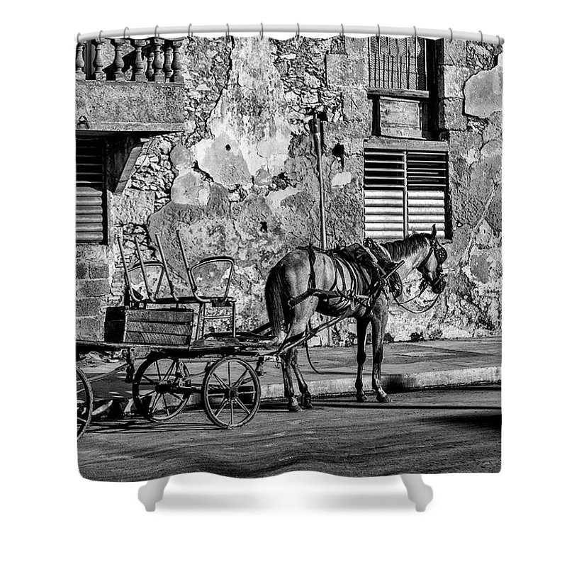 Cuban Horse Power; Cuban; Horse; Power; Horse And Carriage; Carriage; Hp; Cuba; Photography & Digital Art; Photography; Photo; Photo Art; Art; Digital Art; 2bhappy4ever; 2bhappy4ever.com; 2bhappy4evercom; Tobehappyforever; Shower Curtain featuring the photograph Cuban Horse Power BW by Erron