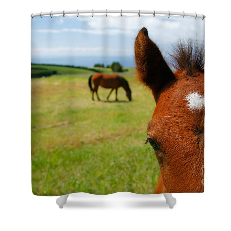 Farm Shower Curtain featuring the photograph Curious Colt by Gaspar Avila