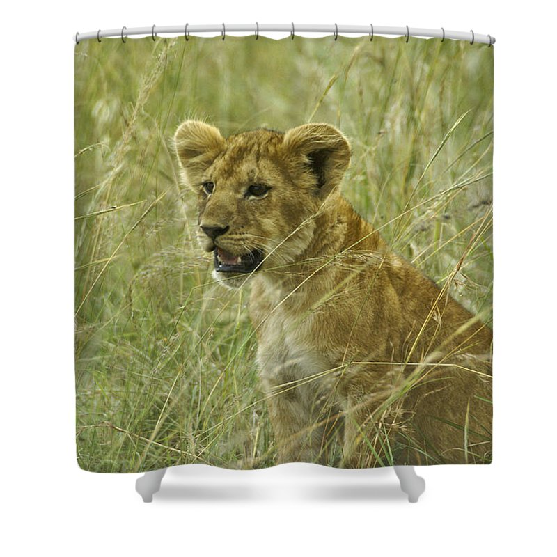 Africa Shower Curtain featuring the photograph Curious Cub by Michele Burgess