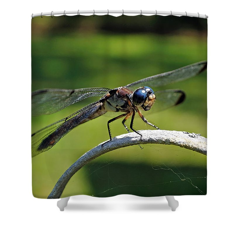 Dragonfly Shower Curtain featuring the photograph Curious Dragonfly by Kenneth Albin