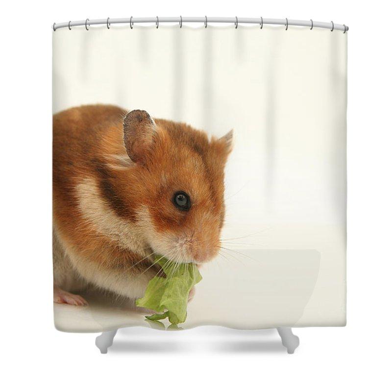 Hamster Shower Curtain featuring the photograph Curious Hamster by Yedidya yos mizrachi