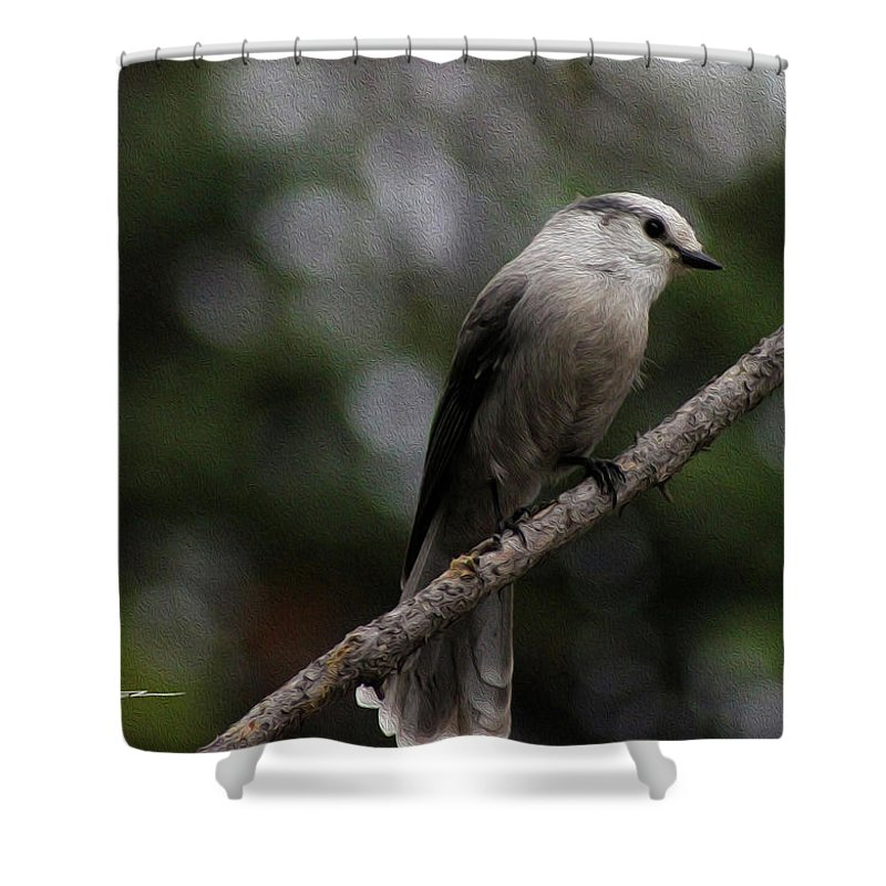 Wildlife Outdoor Images Shower Curtain featuring the photograph Curious Jay by Felipe Gomez