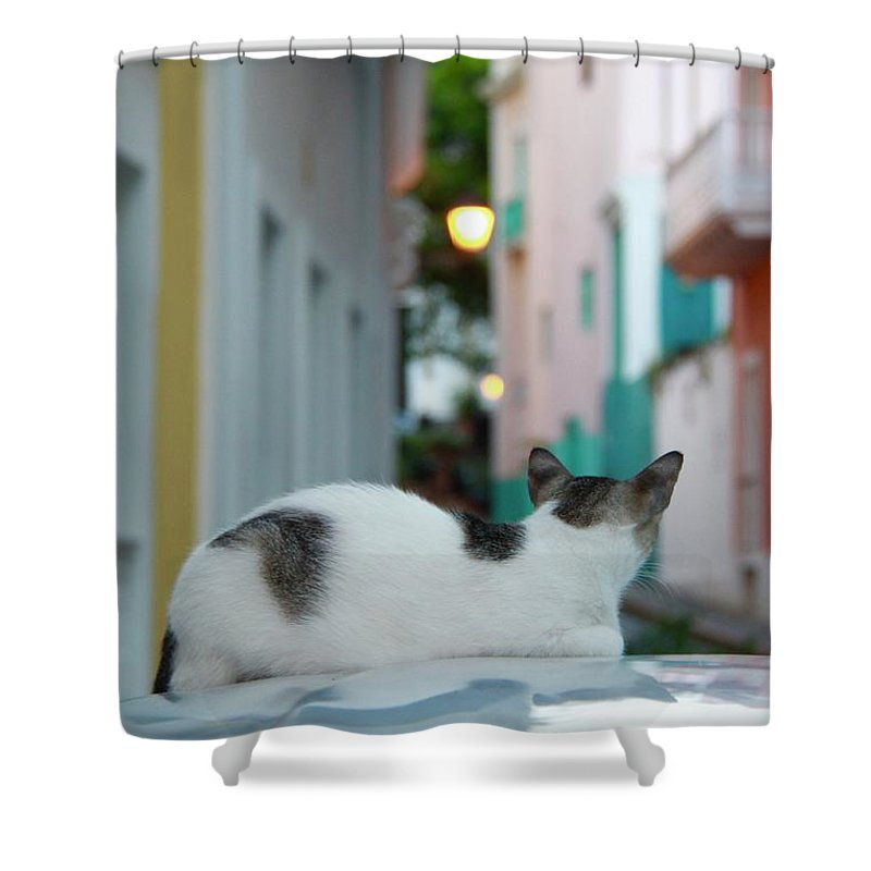 Old San Juan Shower Curtain featuring the photograph Curious Kitty by Suzanne Oesterling