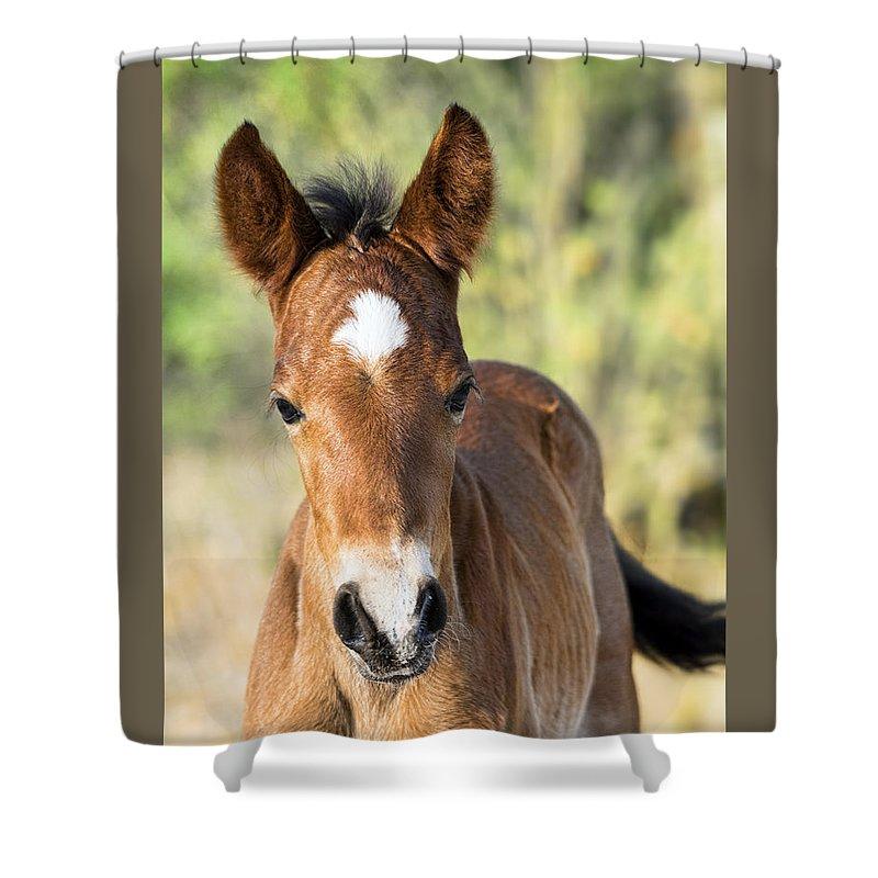 Wild Horses Shower Curtain featuring the photograph Curious Little Colt by Saija Lehtonen