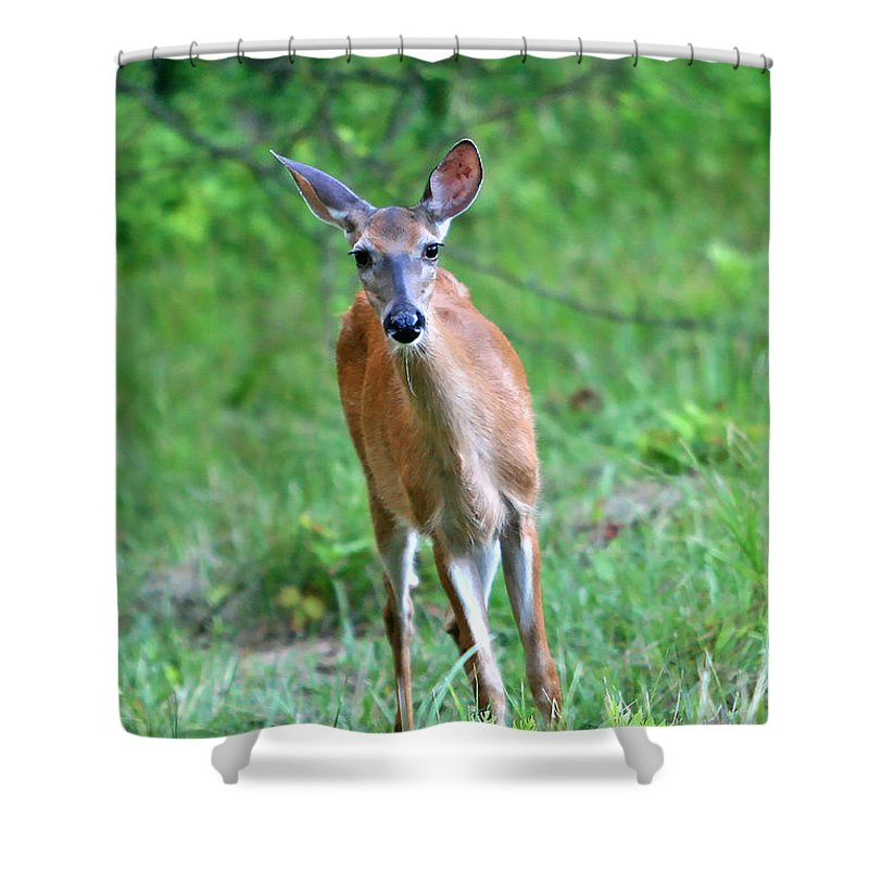 Deer Shower Curtain featuring the photograph Curious by Marle Nopardi