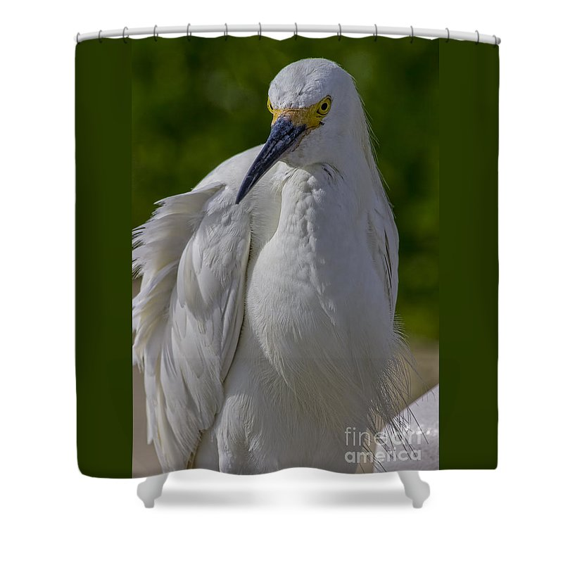 Birds Shower Curtain featuring the photograph Curious by Richard Gripp