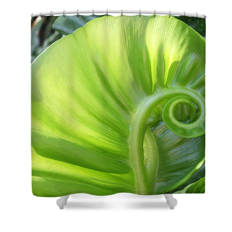 Leaf Shower Curtain featuring the photograph Curly Leaf by Amy Fose