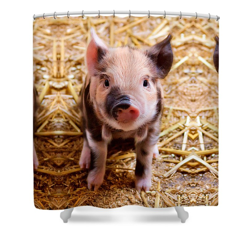 Shower Curtain Featuring The Photograph Cute Baby Piglet Farm Animals Babies