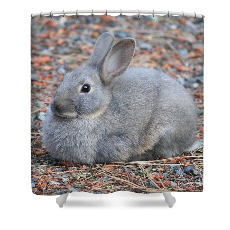 Rabbit Shower Curtain featuring the photograph Cute Campground Rabbit by Carol Groenen
