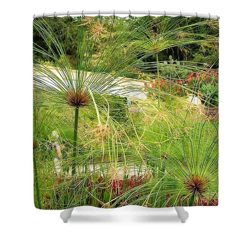 Landscape Shower Curtain featuring the photograph Cyperus Papyrus - Bulrush by Valerie Ornstein