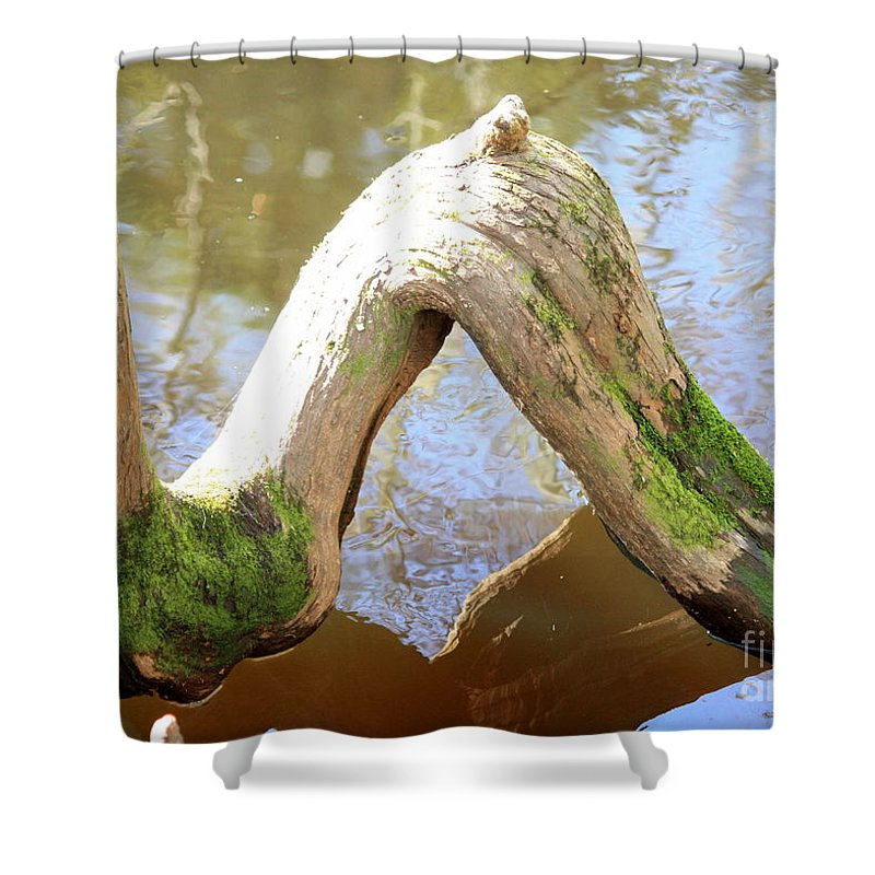 Cypress Knees Shower Curtain featuring the photograph Cypress Knees by Carol Groenen