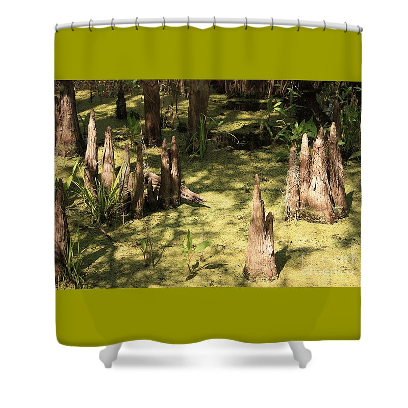 Swamps Shower Curtain featuring the photograph Cypress Knees in Green Swamp by Carol Groenen