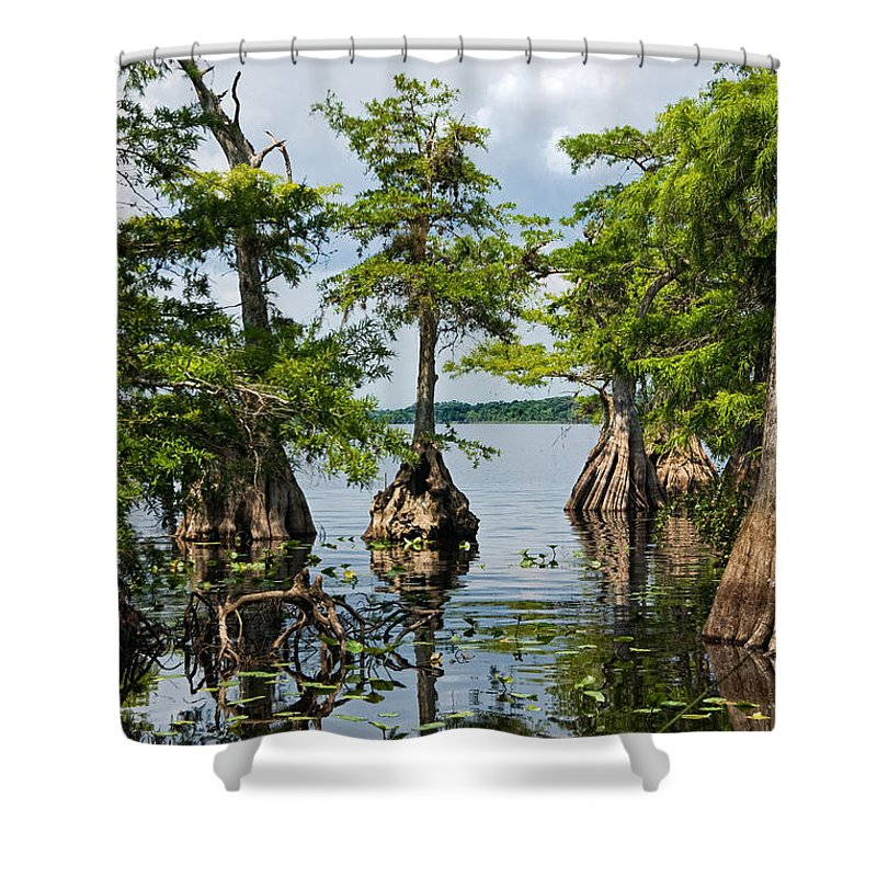 Trees Shower Curtain featuring the photograph Cypress Reflections by Christopher Holmes