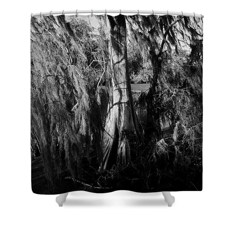 Cypress Tree Shower Curtain featuring the photograph Cypress Tree by David Lee Thompson