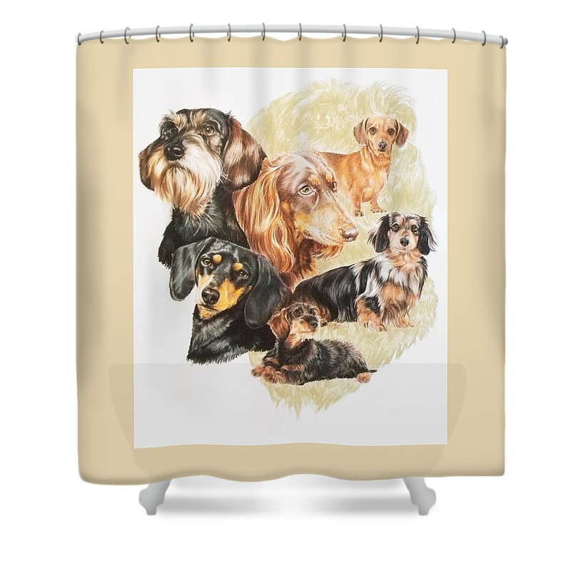 Purebred Dog Shower Curtain featuring the drawing Dachshund Revamp by Barbara Keith