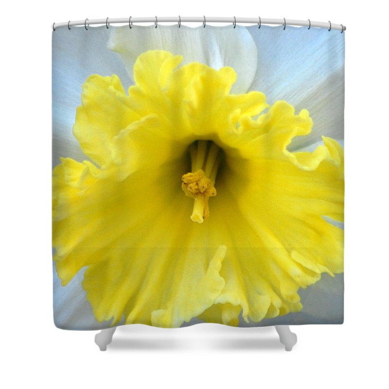 Daffodil Shower Curtain featuring the photograph Daffodil by Amy Fose