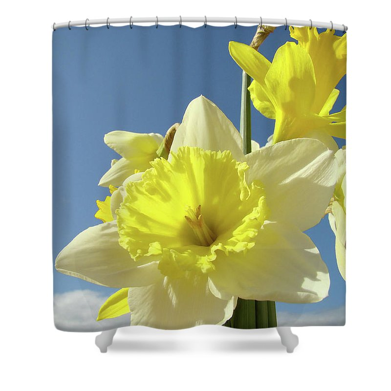 �daffodils Artwork� Shower Curtain featuring the photograph Daffodil Flowers Artwork Floral Photography Spring Flower Art Prints by Baslee Troutman