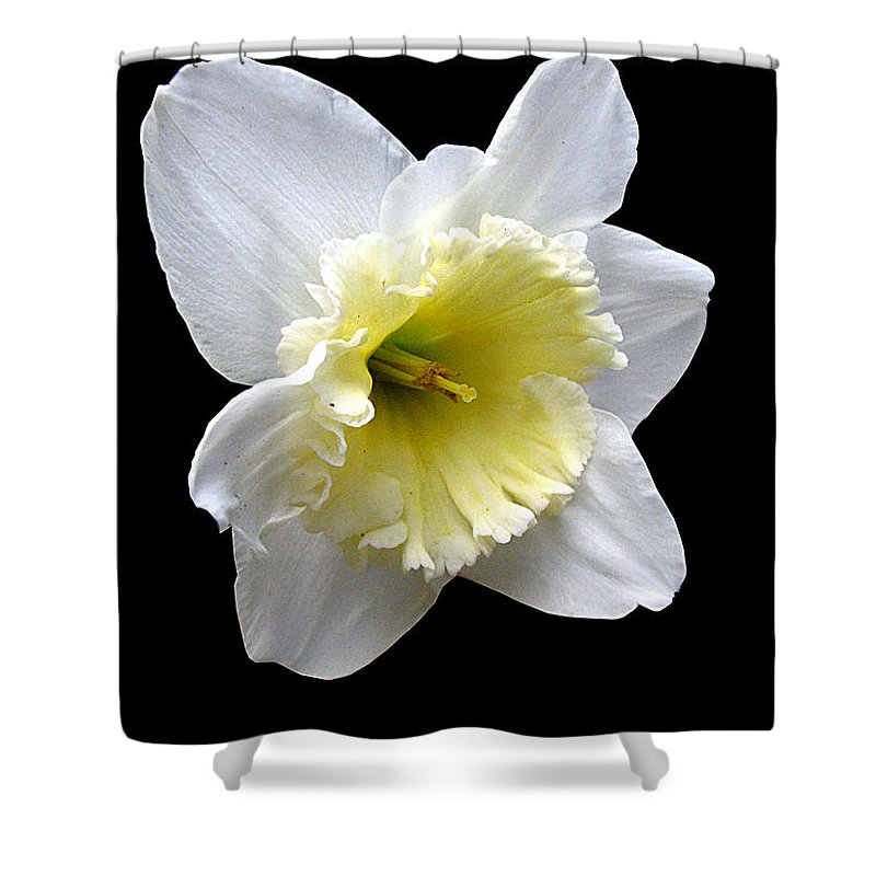 Daffodil Shower Curtain featuring the photograph Daffodil On Black by J M Farris Photography