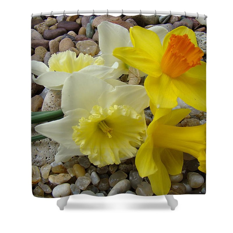 �daffodils Artwork� Shower Curtain featuring the photograph Daffodils Flower Artwork 29 Daffodil Flowers Agate Rock Garden Floral Art Prints by Baslee Troutman
