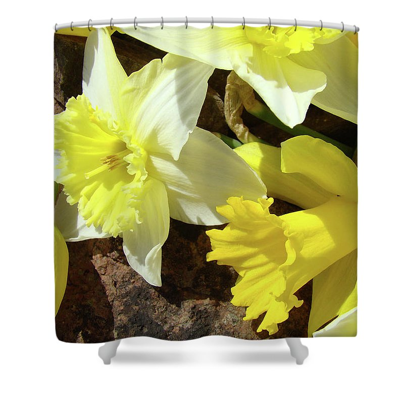 �daffodils Artwork� Shower Curtain featuring the photograph Daffodils Flower Bouquet Rustic Rock Art Daffodil Flowers Artwork Spring Floral Art by Baslee Troutman