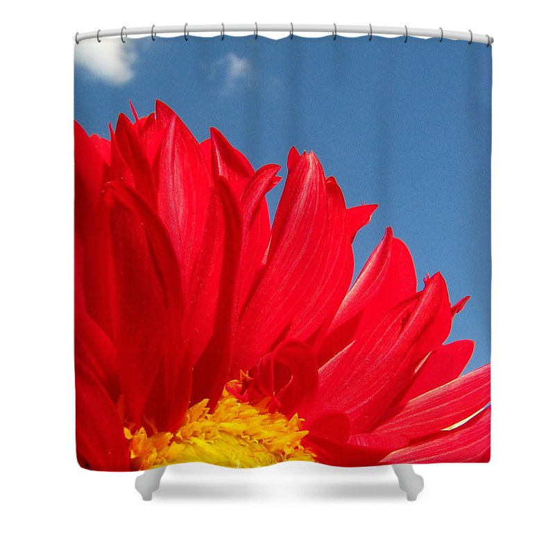 Dahlia Shower Curtain featuring the photograph Dahlia by Amanda Barcon