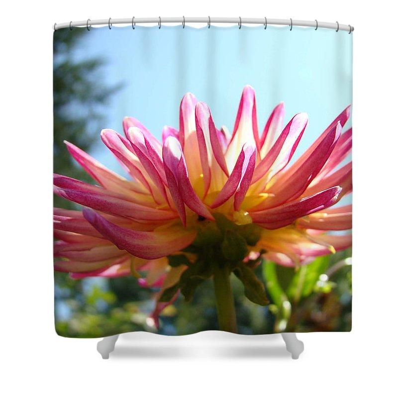 Dahlia Shower Curtain featuring the photograph Dahlia Floral Garden Art Prints Canvas Summer Blue Sky Baslee Troutman by Baslee Troutman