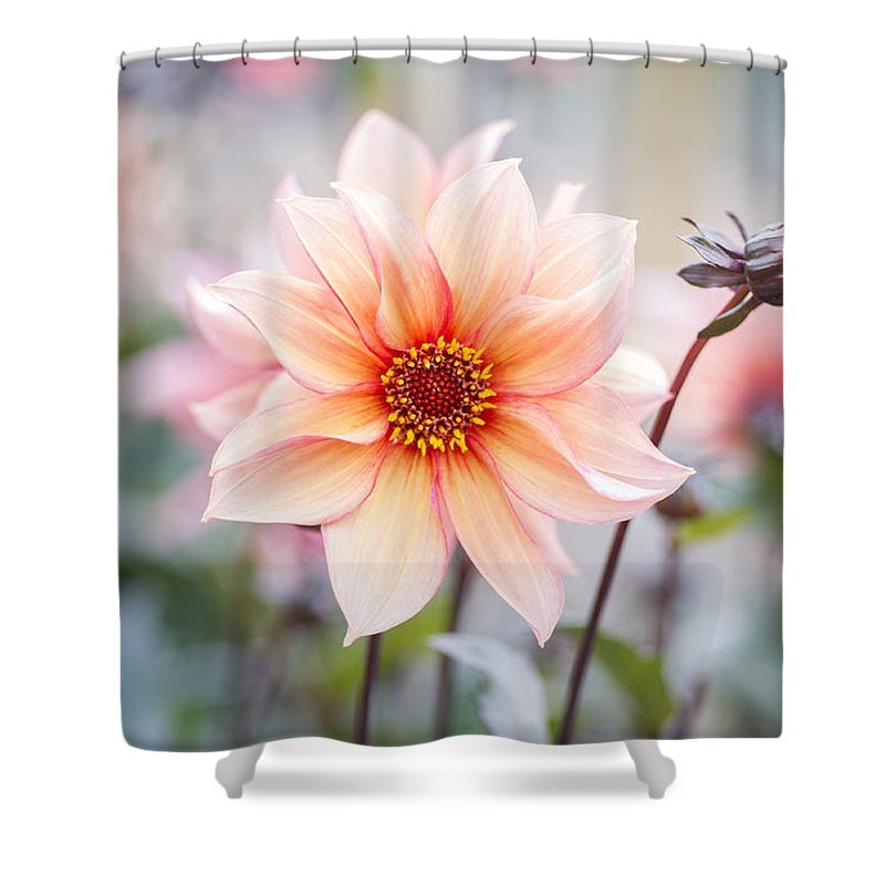 Dahlia Shower Curtain Featuring The Photograph Waltzing Matilda By Jonathan Need