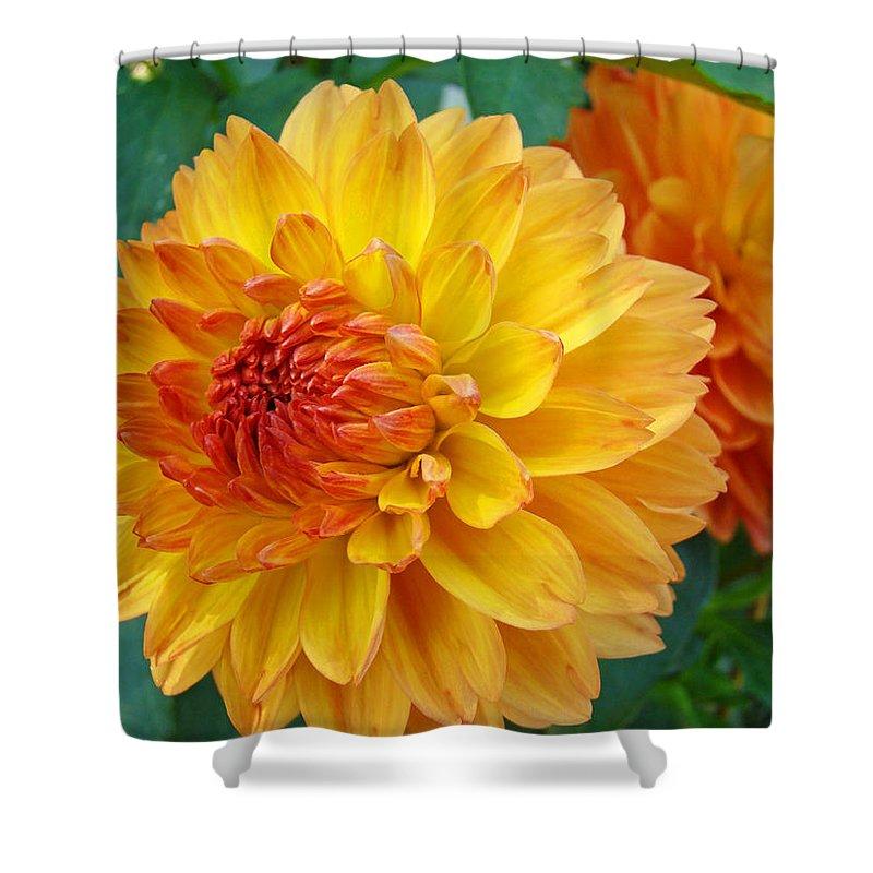 Dahlia Shower Curtain featuring the photograph Dahlias Art Prints Orange Dahlia Flowers Baslee Troutman by Baslee Troutman