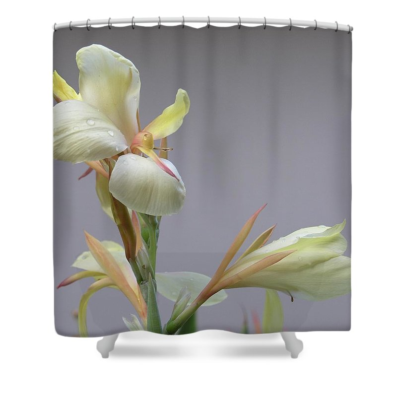 Yellow Shower Curtain featuring the photograph Dainty Orchid by Mary Deal