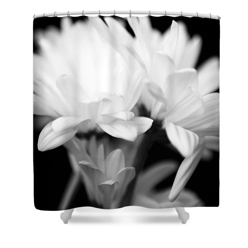 Floral Shower Curtain featuring the photograph Daises In Black And White by Ayesha Lakes