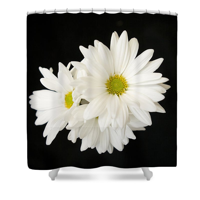 Floral Shower Curtain featuring the photograph Daisies by Ayesha Lakes