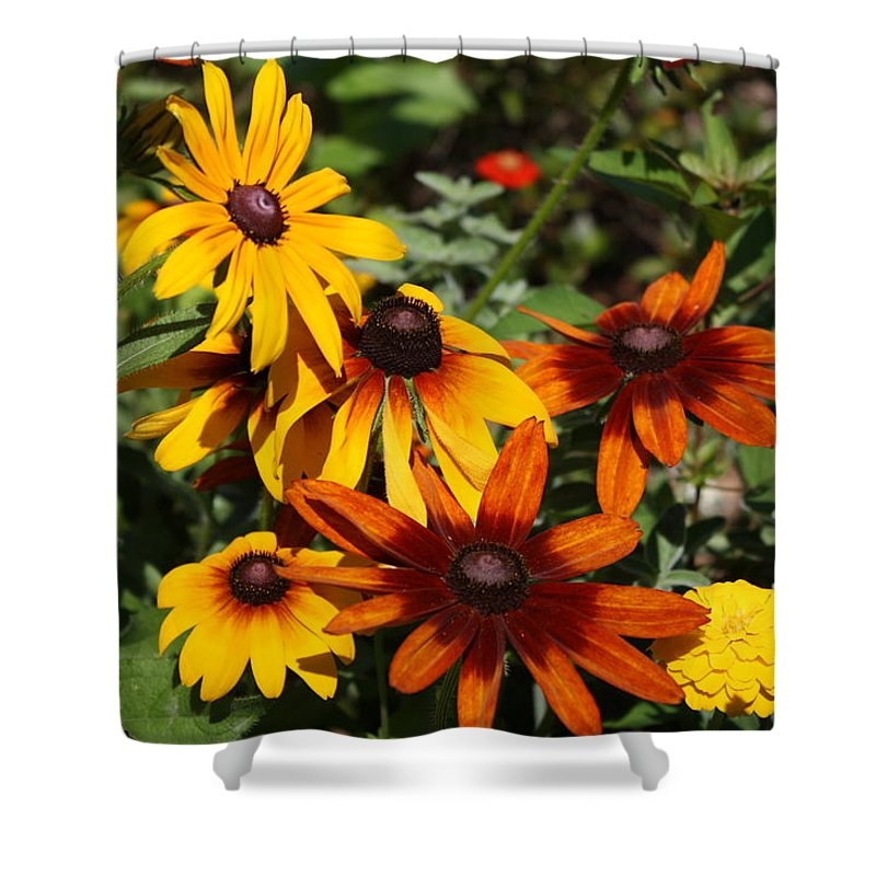 Flowers Shower Curtain featuring the photograph Daisies by Donna Walsh