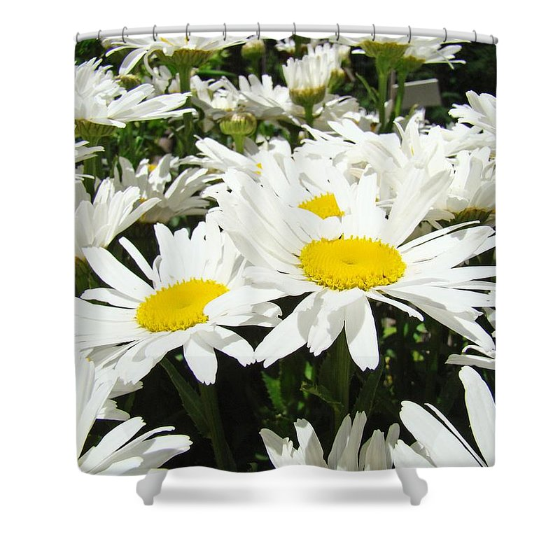 Daisy Shower Curtain featuring the photograph Daisies Floral Landscape Art Prints Daisy Flowers Baslee Troutman by Baslee Troutman
