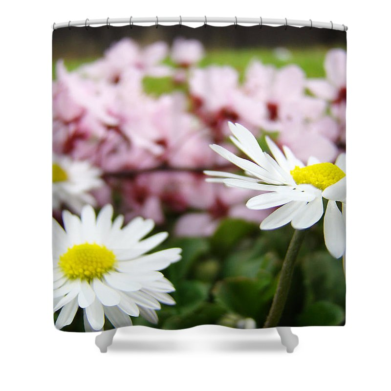 Daisies Shower Curtain featuring the photograph Daisies Flowers Art Prints Spring Flowers Artwork Garden Nature Art by Baslee Troutman