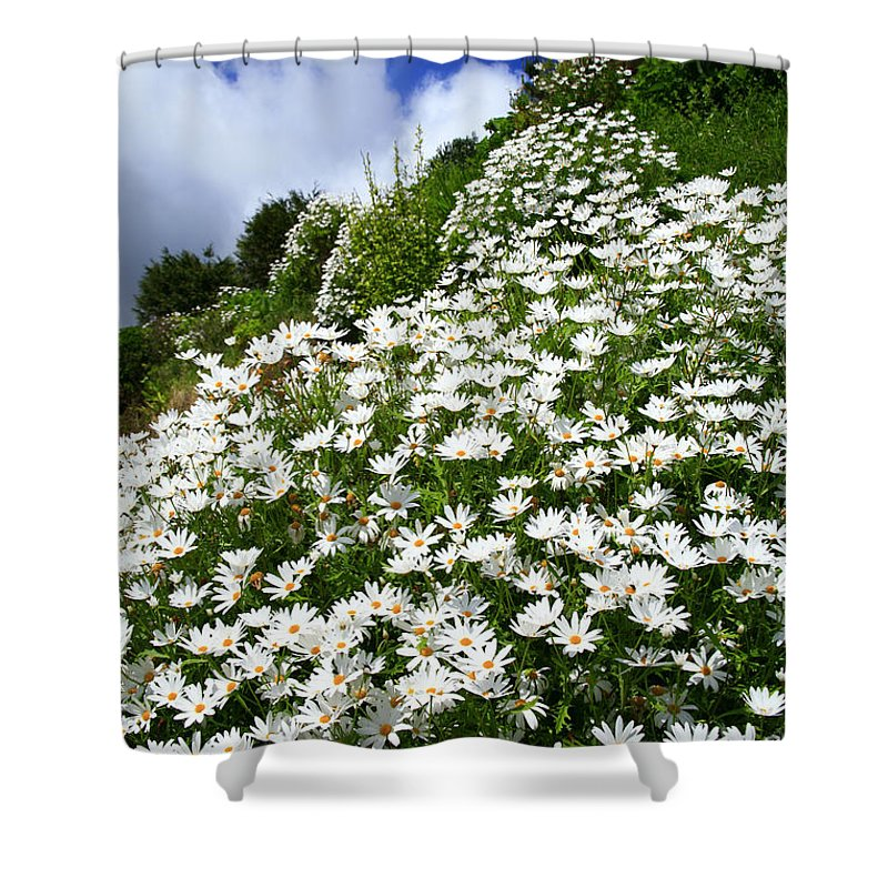 Countryside Shower Curtain featuring the photograph Daisies by Gaspar Avila