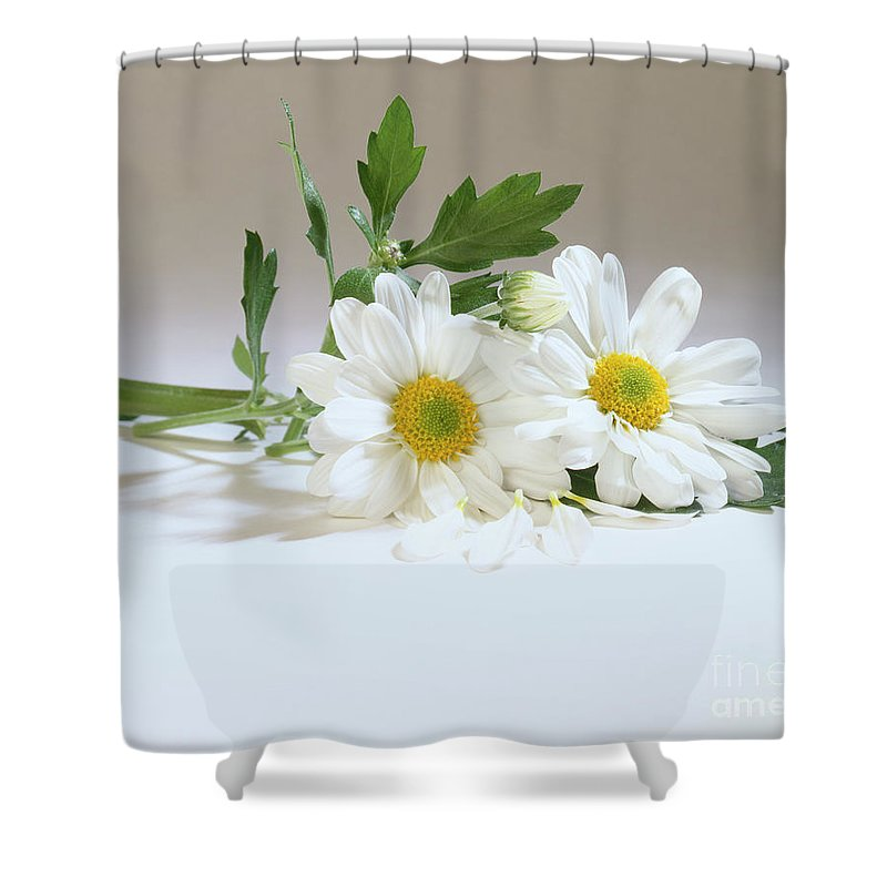 Composition Shower Curtain featuring the photograph Daisies by Stefania Levi