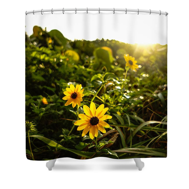 Florida Shower Curtain featuring the photograph Daisies Tangled Sunrise Delray Beach Florida by Lawrence S Richardson Jr