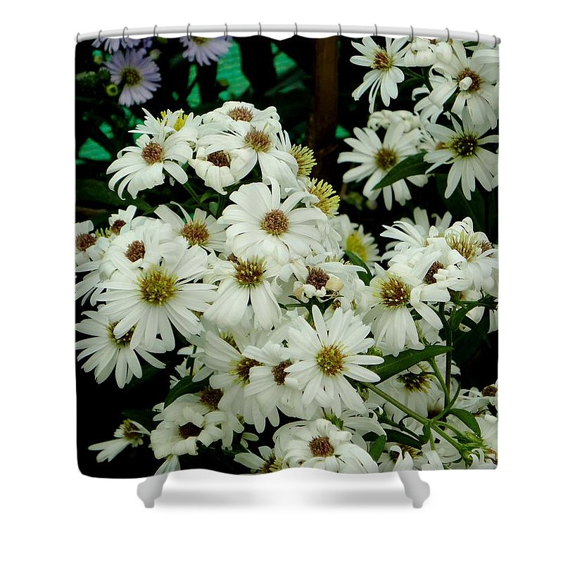 White Shower Curtain featuring the photograph Daisies by Usha Shantharam